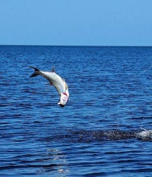 Campeche Tarpon Bay