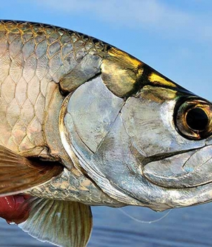 Holbox Fly Fishing Lodge