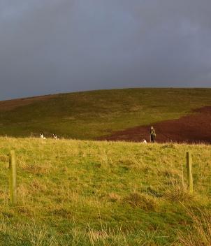 Scotland - Pheasant and Partridge Shooting