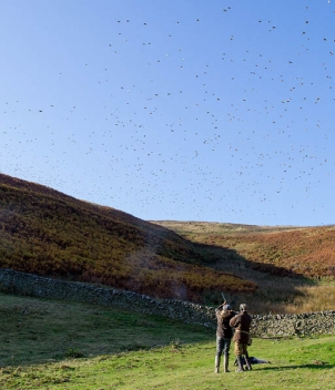 Scotland - Pheasant and Partridge Shooting
