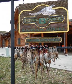 Flying B Ranch