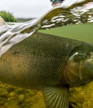 Unalakleet River Lodge