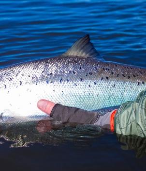 Iceland Salmon