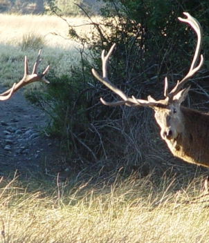 Red Stag Tupungato - Big Game