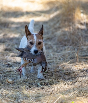 Ventosilla - Partridge Shooting