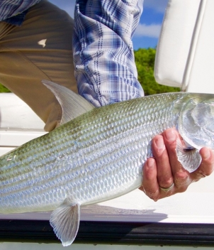 Eleven Angling Andros Mothership