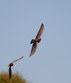 Bird Hunters Africa