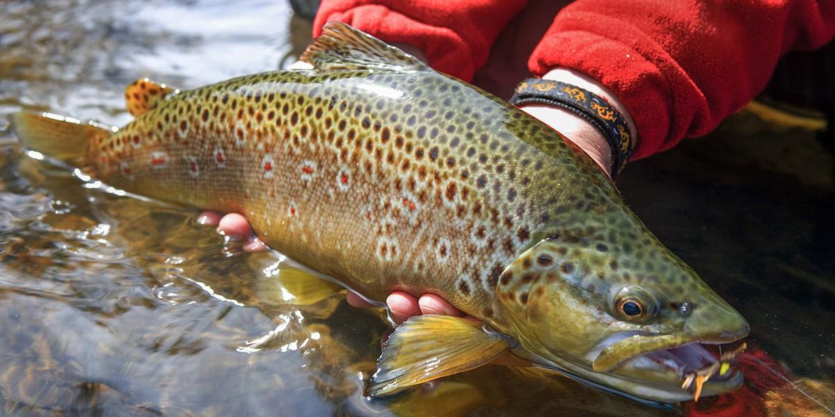 dos rios senior singles Dos rios (2) elk (4) fort bragg (64)  single family condo/coop farms/ranches for sale/for lease for sale for lease senior communities senior: yes mls .