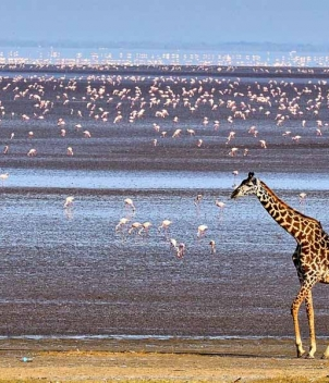 Photographic Safari in East Africa, July 2021